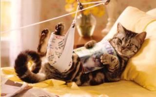 У кота гнойная рана что делать, заживляющая мазь для кошек