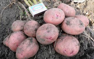 Сорт картофеля журавинка характеристика отзывы