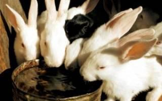 Можно ли давать кроликам снег вместо воды?