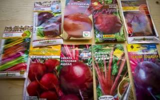Лучшие семена свеклы для открытого грунта