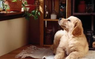 Как назвать щенка мальчика дворняжку рыжего цвета – имя для собаки мужского пола