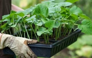 Как правильно выращивать огурцы в теплице?