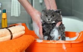 Шампунь с хлоргексидином для кошек