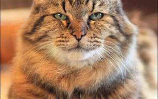 У кота плохая шерсть, что делать?