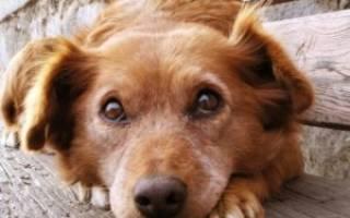 Мелоксикам для собак инструкция по применению