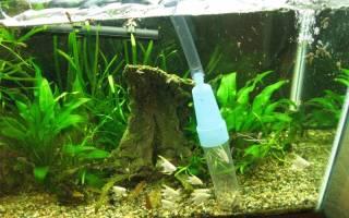 Сифон для очистки грунта в аквариуме