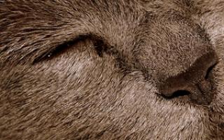 У кота глаз не открывается, что делать?