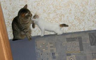 Как помирить кота и кошку: как примирить кошек?