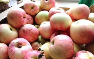 Яблоня розовый налив описание фото отзывы