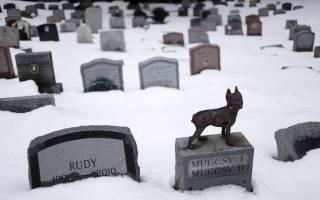 Можно ли хоронить кота на человеческом кладбище, как похоронить кошку?