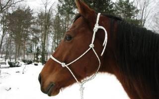 Как сделать недоуздок своими руками для лошади – веревочная уздечка
