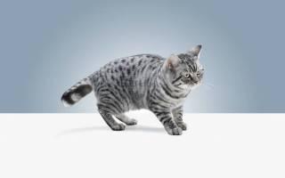 Можно ли кошкам валерьянку в таблетках?