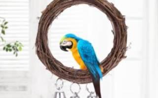 Как сделать качели для попугая своими руками?