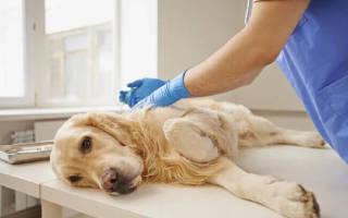 Как происходит усыпление собаки на дому?