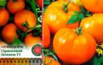Томат оранжевый бочонок характеристика и описание сорта