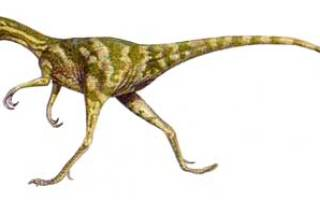 Информация о компсогнат: динозавр compsognathus