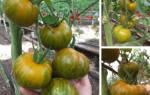Полосатые помидоры сорта фото