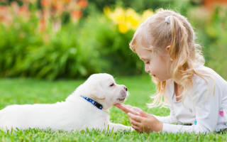 Породы собак которые ладят с детьми
