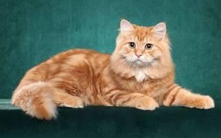 Фото рыжего кота с рыжими глазами: рыженький котенок