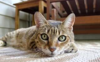 Уролекс для кошек: урологические капли