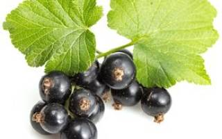 Чем полезна черная смородина для организма?