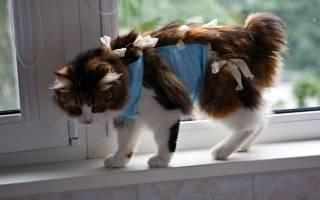 Как завязывать попону кошке после стерилизации?