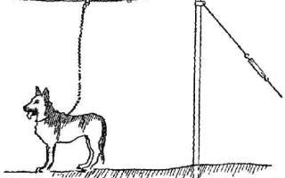 Длина цепи караульной собаки по уставу