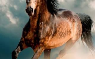 Фото самых красивых лошадей в мире