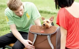 Как выбрать переноску для собаки по размерам?