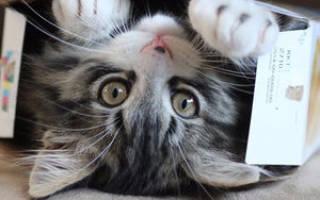 Что значит передержка животных, временное содержание кошек