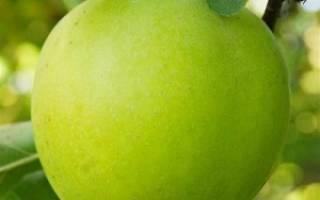 Яблоко мутсу фото и описание
