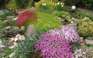 Ползучие растения для сада фото и названия: почвопокровные в ландшафтном дизайне