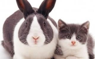 Кролик и кошка в квартире