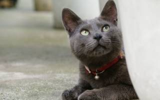 Ошейник для котят с какого возраста