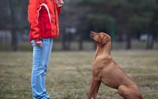 Как отучить щенка прыгать на людей?