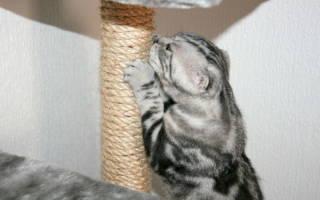 Как защитить обои от кошки: защита стен от кошек