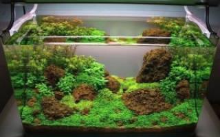 Как должен работать фильтр в аквариуме, видео: течение в травнике