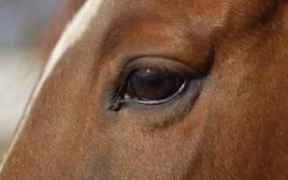 Зачем лошадям закрывают глаза по бокам?