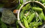 Как засолить огурцы малосольные в кастрюле?