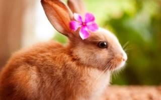 Игрушки для декоративных кроликов своими руками