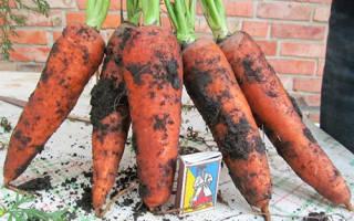Морковь абако описание сорта фото отзывы