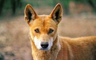 Собаке 5 лет сколько это по человеческим – 2 года по собачьи