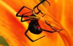 К какому классу животных относится паук – паукообразные и насекомые отличия