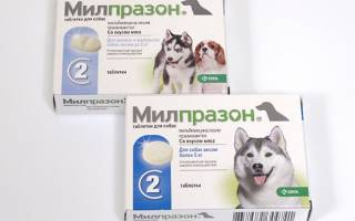 Милпразон для собак инструкция по применению отзывы, мильпразон от глистов