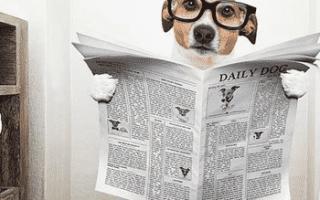 Почему у собаки черный стул: темный кал у щенка