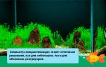 Хемиантус микрантемоидес содержание в аквариуме: hemianthus micranthemoides