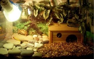 Грунт для сухопутной черепахи в террариуме