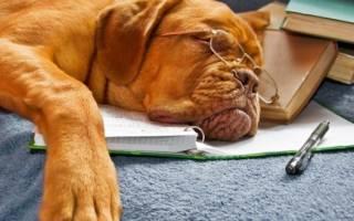 Породы собак со спокойным характером