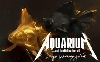 Золотые рыбки аквариумные фото и название, виды золотых рыбок