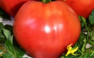 Томат воловье сердце характеристика и описание сорта